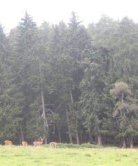 Wandelen: Geotrail Zollnersee