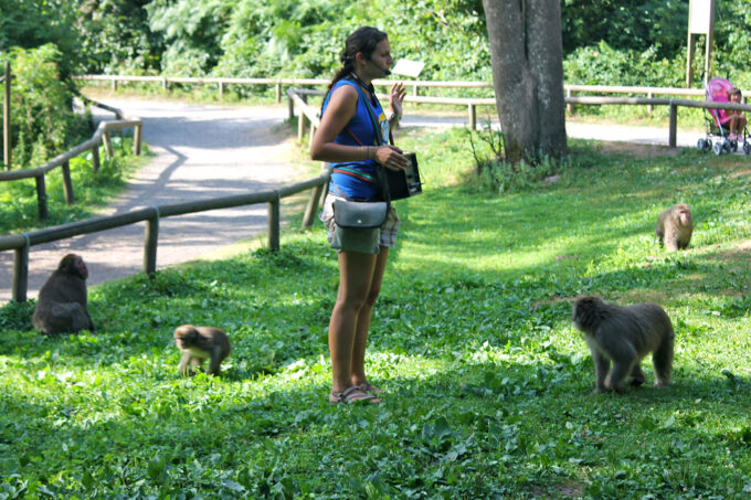 Dierenpark: apenpark Affenberg