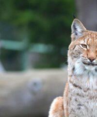 Dierenpark: Assling Wildpark