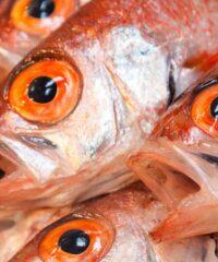 Vissen: Visakte bij het toeristenbureau