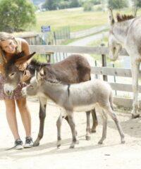 Animal park: Donkey park Maltatal