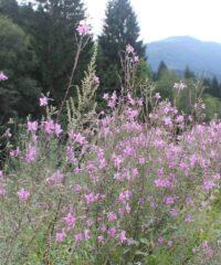 Wandelen: Villacher Alpengarten