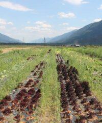 Faciliteiten: Supermarkt Gemüse Power